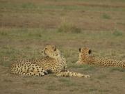 Amboseli_Gep