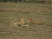 Amboseli_gep2